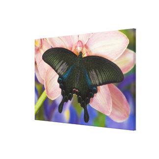 Sammamish, tropischer Schmetterling 11 Washingtons Leinwanddruck