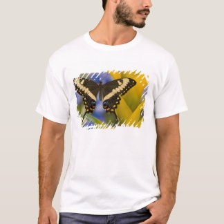 Sammamish, tropischer Schmetterling 11 Washingtons T-Shirt