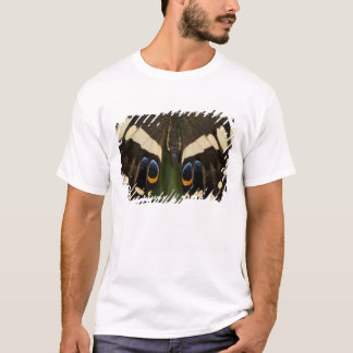 Sammamish, tropischer Schmetterling 12 Washingtons T-Shirt