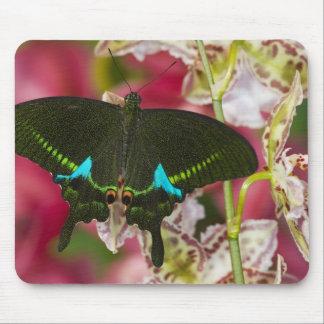 Sammamish, tropischer Schmetterling 14 Washingtons Mousepad