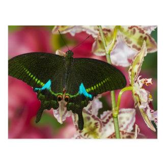 Sammamish, tropischer Schmetterling 14 Washingtons Postkarte