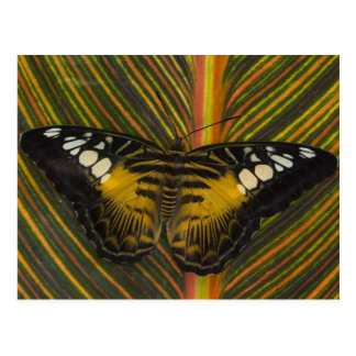 Sammamish, tropischer Schmetterling 25 Washingtons Postkarten