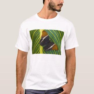 Sammamish, tropischer Schmetterling 28 Washingtons T-Shirt