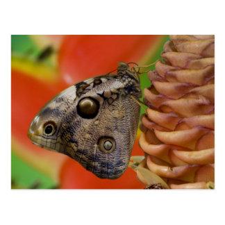 Sammamish, tropischer Schmetterling 2 Washingtons Postkarte