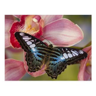 Sammamish, tropischer Schmetterling 2 Washingtons Postkarten