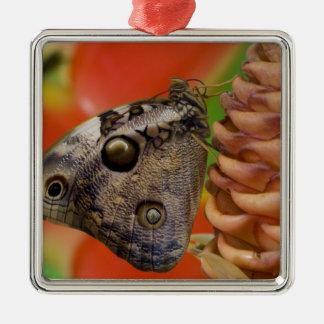 Sammamish, tropischer Schmetterling 2 Washingtons Quadratisches Silberfarbenes Ornament