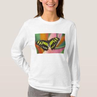 Sammamish, tropischer Schmetterling 32 Washingtons T-Shirt