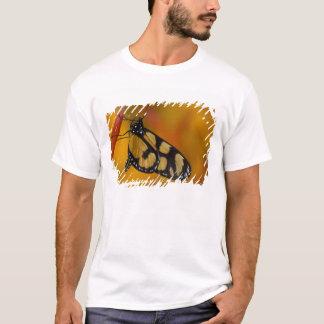 Sammamish, tropischer Schmetterling 33 Washingtons T-Shirt