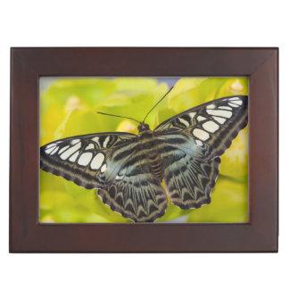 Sammamish, tropischer Schmetterling 38 Washingtons Erinnerungsbox