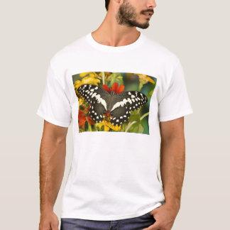 Sammamish, tropischer Schmetterling 39 Washingtons T-Shirt