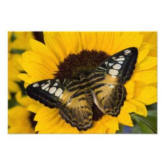 Sammamish, tropischer Schmetterling 42 Washingtons Fotografischer Druck