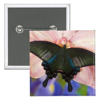 Sammamish, tropischer Schmetterling 6 Washingtons Anstecknadel