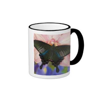 Sammamish, tropischer Schmetterling 6 Washingtons Kaffeetassen