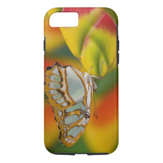 Sammamish, tropischer Schmetterling 7 Washingtons iPhone 8/7 Hülle