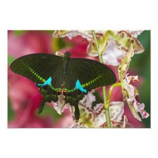 Sammamish, tropischer Schmetterling 7 Washingtons Kunstfotos