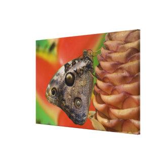 Sammamish, tropischer Schmetterling 7 Washingtons Leinwanddruck