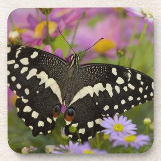 Sammamish, tropischer Schmetterling 8 Washingtons Drink Untersetzer