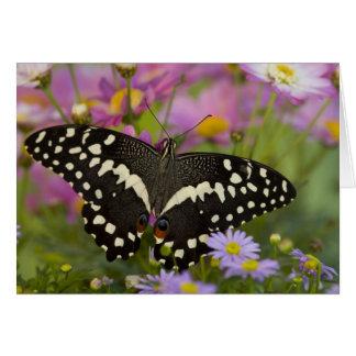 Sammamish, tropischer Schmetterling 8 Washingtons Grußkarte