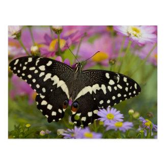 Sammamish, tropischer Schmetterling 8 Washingtons Postkarte