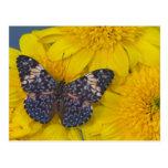 Sammamish Washington Fotografie von Schmetterling  Postkarten