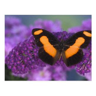 Sammamish Washington Fotografie von Schmetterling Postkarte