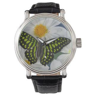 Sammamish Washington Fotografie von Schmetterling Uhr