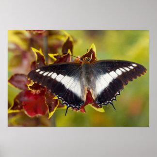 Sammamish, Washington. Tropische Schmetterlinge 16 Plakate