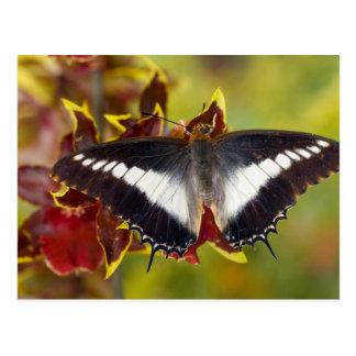 Sammamish, Washington. Tropische Schmetterlinge 16 Postkarten