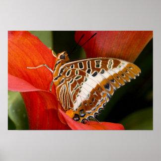 Sammamish, Washington. Tropische Schmetterlinge 17 Plakatdrucke