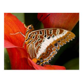 Sammamish, Washington. Tropische Schmetterlinge 17 Postkarte