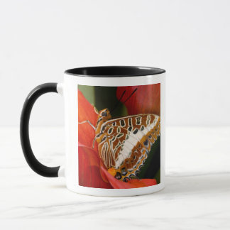Sammamish, Washington. Tropische Schmetterlinge 17 Tasse