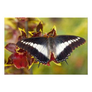 Sammamish, Washington. Tropische Schmetterlinge 20 Photodrucke