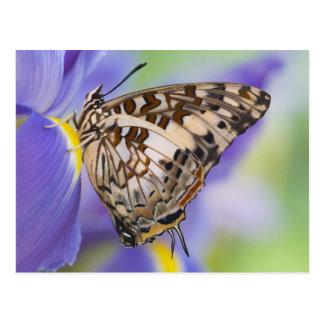 Sammamish, Washington. Tropische Schmetterlinge 22 Postkarten