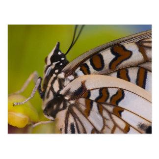 Sammamish, Washington. Tropische Schmetterlinge 23 Postkarten