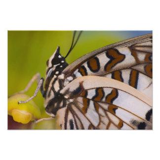 Sammamish, Washington. Tropische Schmetterlinge 27 Kunstfotos