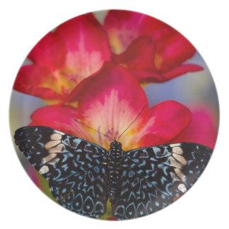 Sammamish Washington tropische Schmetterlinge 2 Flacher Teller