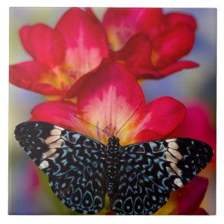 Sammamish Washington tropische Schmetterlinge 2 Große Quadratische Fliese