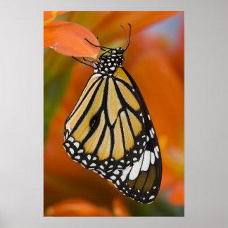 Sammamish, Washington. Tropische Schmetterlinge 2 Poster