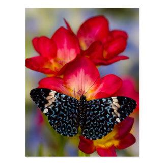 Sammamish Washington tropische Schmetterlinge 2 Postkarten