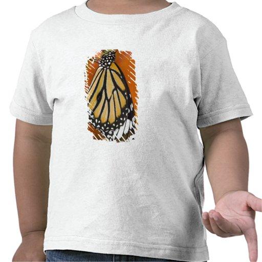 Sammamish, Washington. Tropische Schmetterlinge 2 Hemden