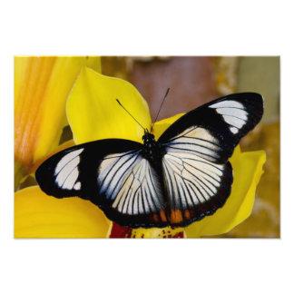 Sammamish, Washington. Tropische Schmetterlinge 37 Fotografische Drucke