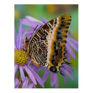 Sammamish Washington tropische Schmetterlinge 3 Postkarten