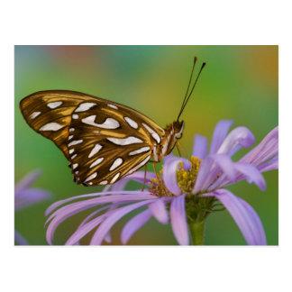 Sammamish, Washington. Tropische Schmetterlinge 40 Postkarte