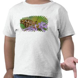 Sammamish, Washington. Tropische Schmetterlinge 40 Shirts