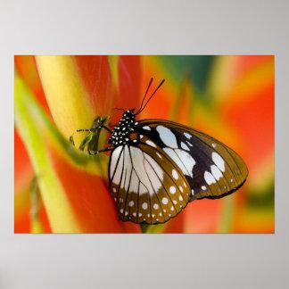 Sammamish, Washington. Tropische Schmetterlinge 42 Poster