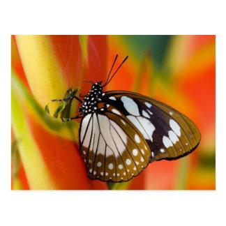 Sammamish, Washington. Tropische Schmetterlinge 42 Postkarten