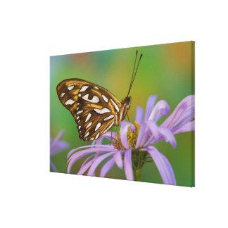 Sammamish, Washington. Tropische Schmetterlinge 44 Leinwanddrucke