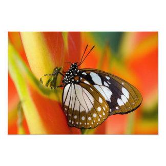 Sammamish, Washington. Tropische Schmetterlinge 46 Kunstfoto