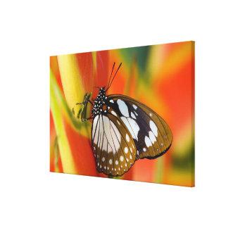 Sammamish, Washington. Tropische Schmetterlinge 46 Gespannte Galeriedrucke