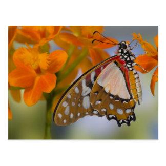 Sammamish, Washington. Tropische Schmetterlinge 47 Postkarte